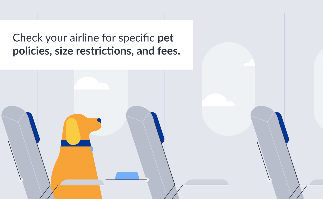 Plane travel with pup policies.