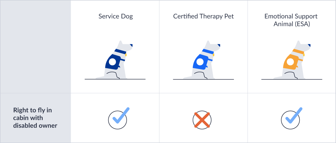 Plane travel service dog requirements.